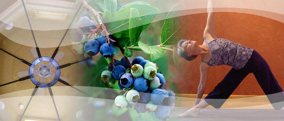 Blueberry Gardens Healing Center